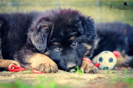 Labrador en fulltime werken Tips en adviezen als u